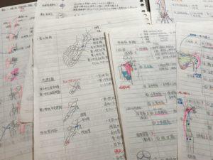 解剖学 ノート