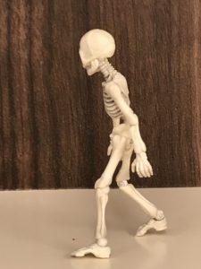 立位のガイコツ模型の写真