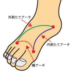足の3つのアーチの図